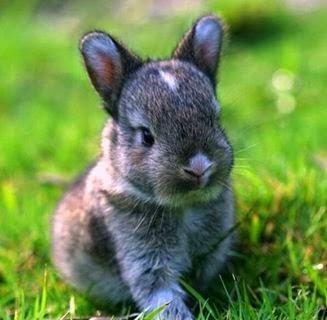imagenes de conejo