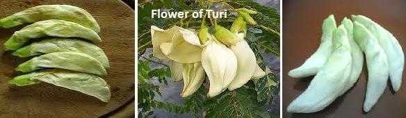 Flowers of Turi
