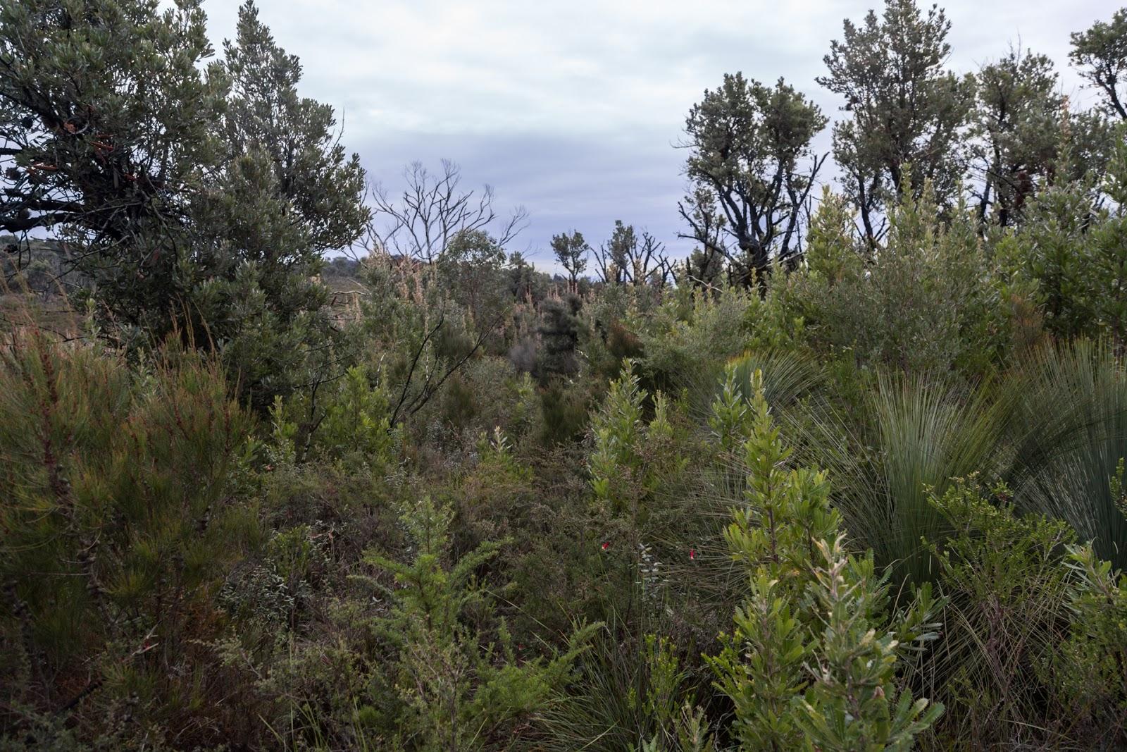 bush tin mine track wilsons promontory