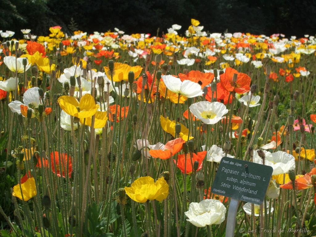 Les trucs de myrtille les pavots du jardin des plantes for Plantes paris