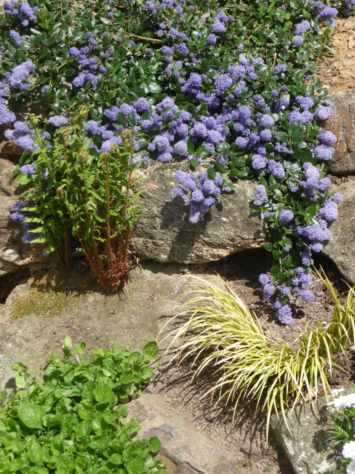Photo parterre rocaille un trs beau jardin presque sans for Parterre rocaille