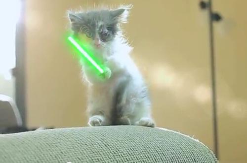 A Revolta dos Gatinhos Jedi