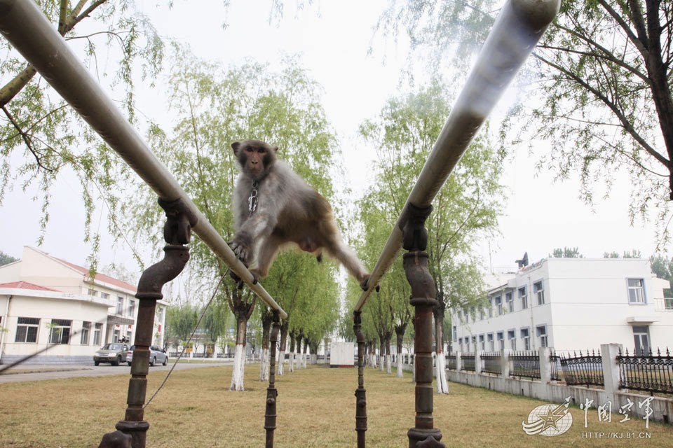 chinese-air-force-monkeys