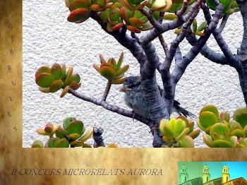 II Concurs de Microrelats Aurora 2015