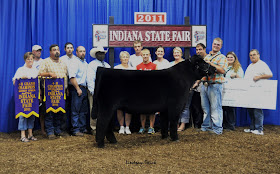 2011 Indiana State Fair ~ Grand Champion Market Steer ~ Sired by Eye Candy