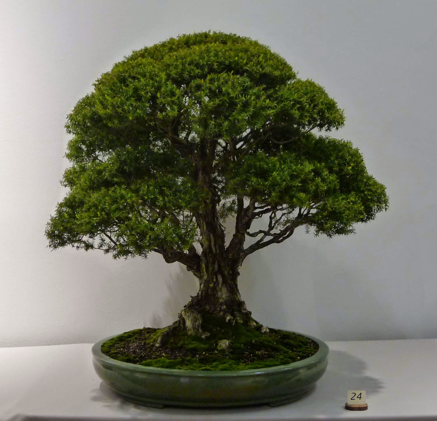 Bonsai Amp Pottery April 2015