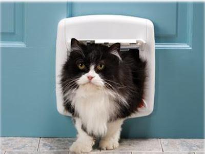 Sir Isaac Newton, penemu catflap atau pintu kucing