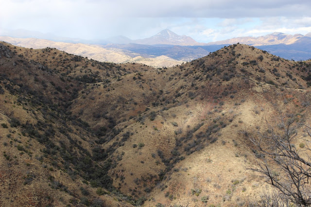 Coues%2BDeer%2BHunting%2Bin%2BSonora%2BMexico%2Bwith%2BColburn%2Band%2BScott%2BOutfitters%2BWhitetail%2BCountry%2B7.JPG