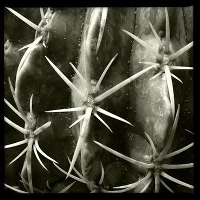 espinas de cactus