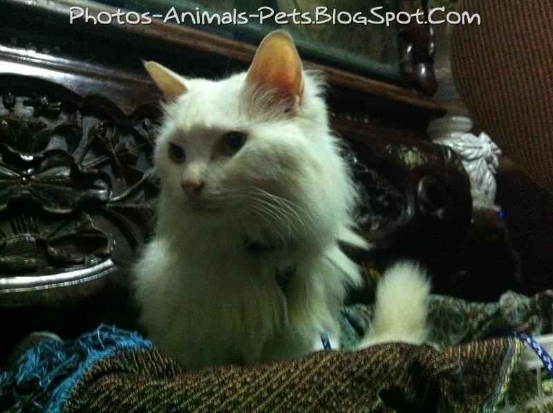 http://2.bp.blogspot.com/-Bxpx8tA3QNw/TbGitRm5nnI/AAAAAAAAAvg/nH2lDNaLd20/s1600/Cat%2Bfur%2Bruffled_0005.jpg