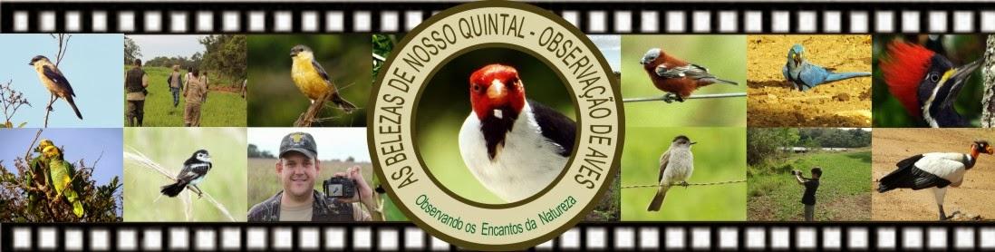 AS BELEZAS DE NOSSO QUINTAL - OBSERVAÇÃO DE AVES