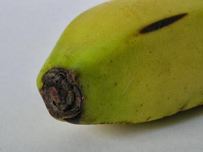 manfaat kulit pisang