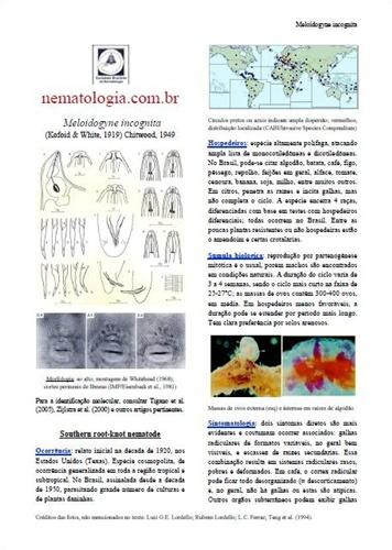 Resultado de imagem para site da sociedade brasileira nematologia