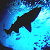 Pelagic Zone - Sunlight Zone Fish