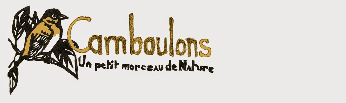 camboulons