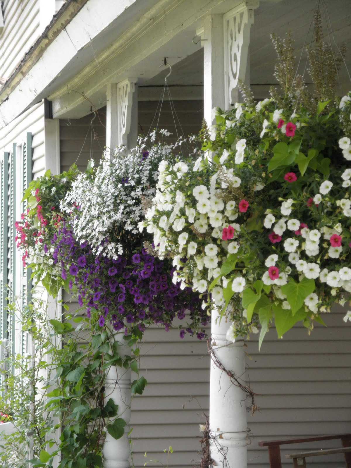 beautiful hanging baskets and a giveaway rusty hinge. Black Bedroom Furniture Sets. Home Design Ideas