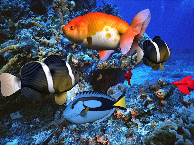 3d Fish Screensaver1
