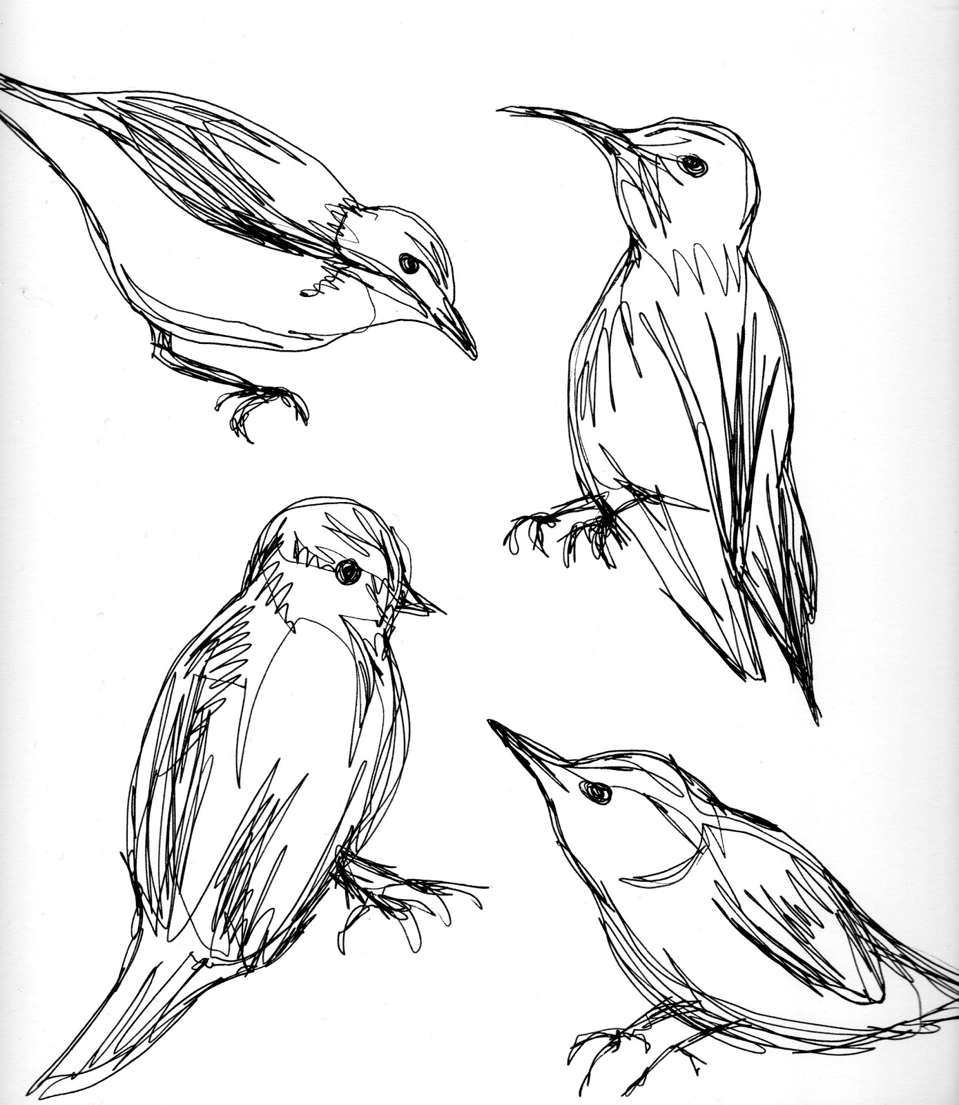 Line Drawing Of Animals And Birds : Birds line drawing
