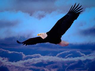 O que significa seu AVATAR?  Aguia-voando-43248