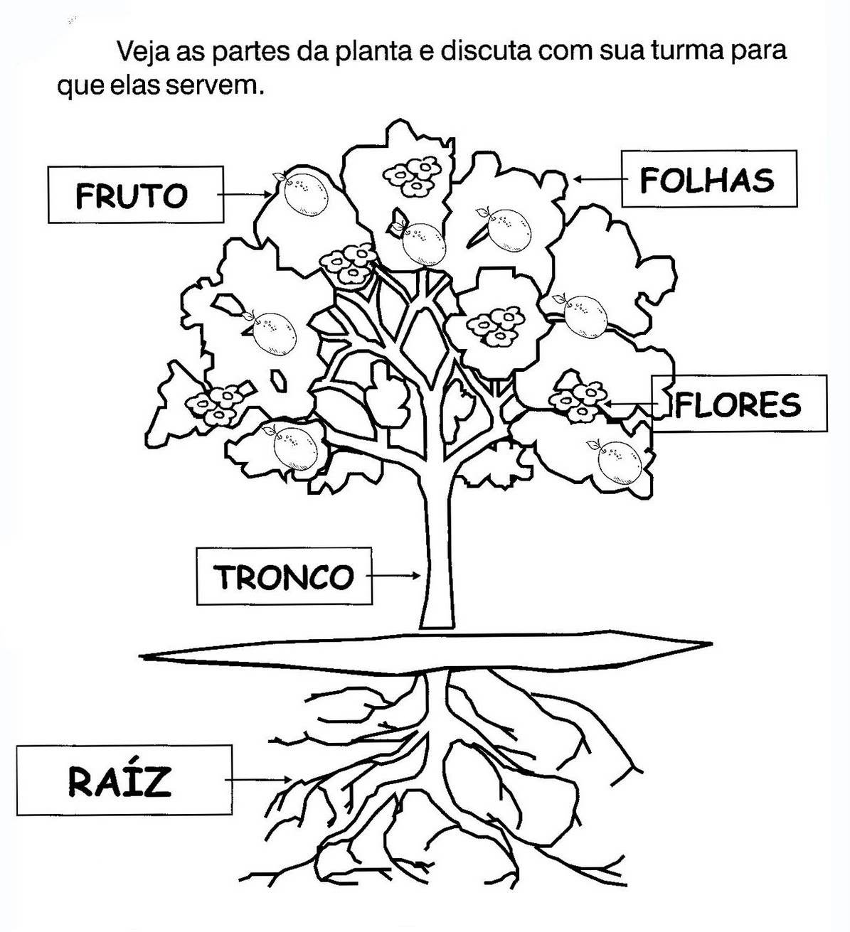 Plantas E Suas Partes