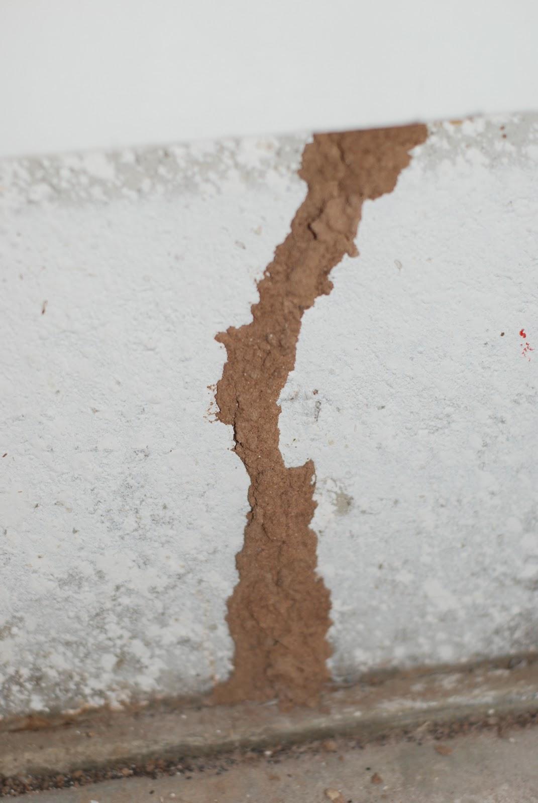 Arizona S Termite Expert
