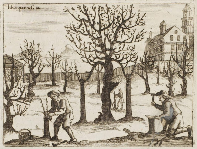 17th century engraving - fruit tree grafting in farm field