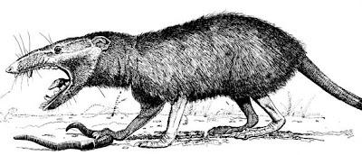 mamiferos del Jurasico Amphitherium