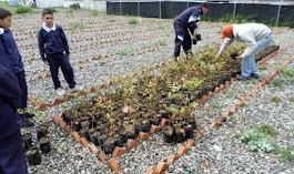 Donan arbustos para reforestar nacientes hídricas