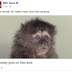 Quip: Monkey Goes on First Date