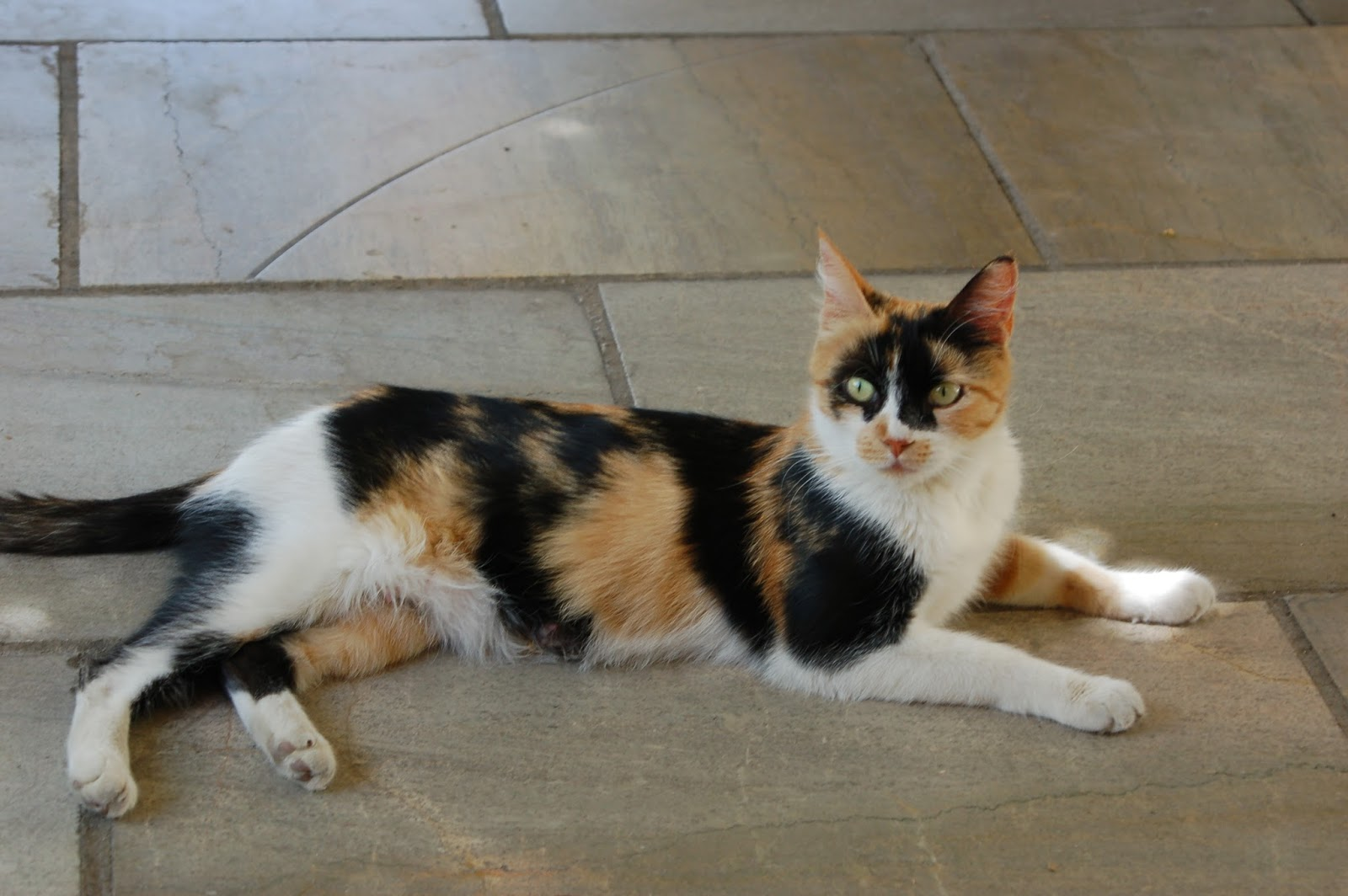 Can it happen here?: Friday cat blogging: Spanish city cats