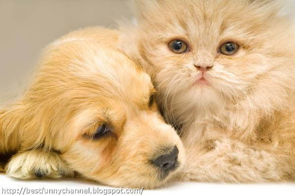 Red kitten and puppy.