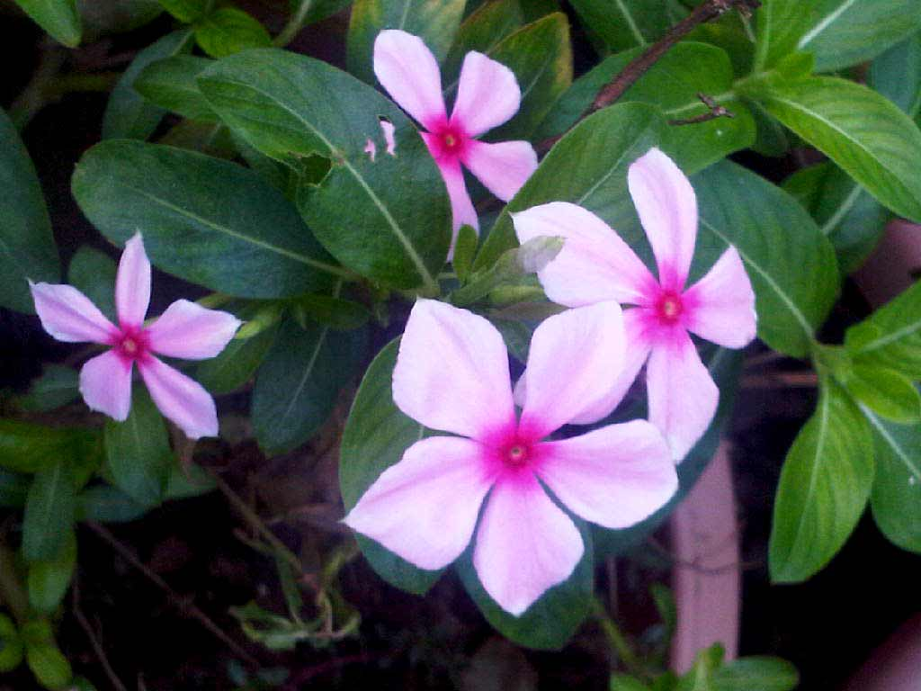 Names Of Flowers In India Tell A Friend About This Flower List Of
