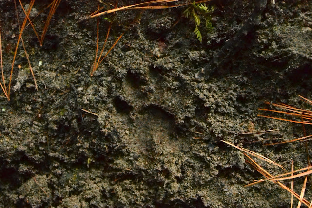 Fisher footprint