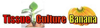 My Blog on Tissue culture Banana
