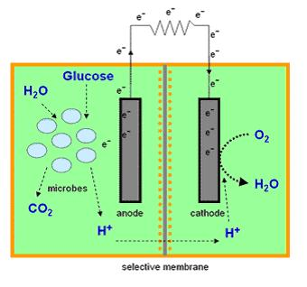 Microbial fuel cell as energy alternative source