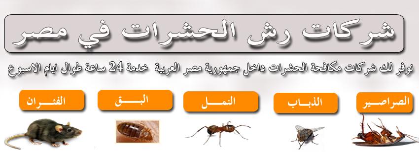 دليل شركات رش الحشرات في مصر