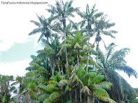 pohon nibung sebagai lambang persatuan masyarakat Riau