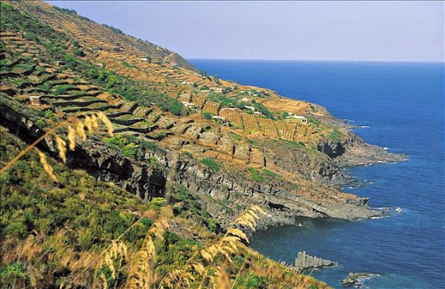 Donnafugata vineyard in Pantelleria Sicily