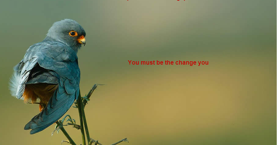 Beautiful Birds Wallpapers With Inspiration Quotes Photo