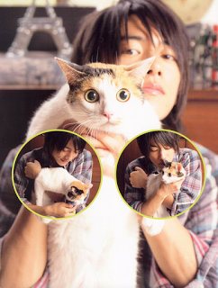Takeru Sato and his cats