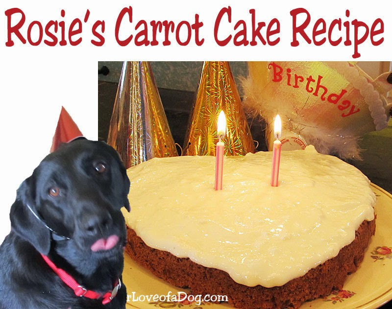 Talking Dogs At For Love Of A Dog Rosies Birthday Carrot Cake For