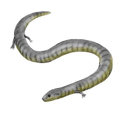 anfibios prehistoricos Eocaecilia