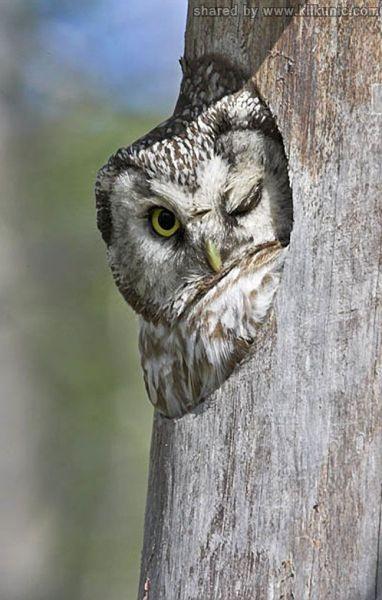 http://2.bp.blogspot.com/-C2qlxPX0CMA/TXzD0MtfORI/AAAAAAAARDQ/ILE4nBsoMT8/s1600/these_funny_animals_635_640_12.jpg