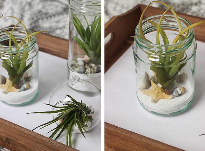 Tillandsia, Air Plants in glass jam jars by The Goodowl