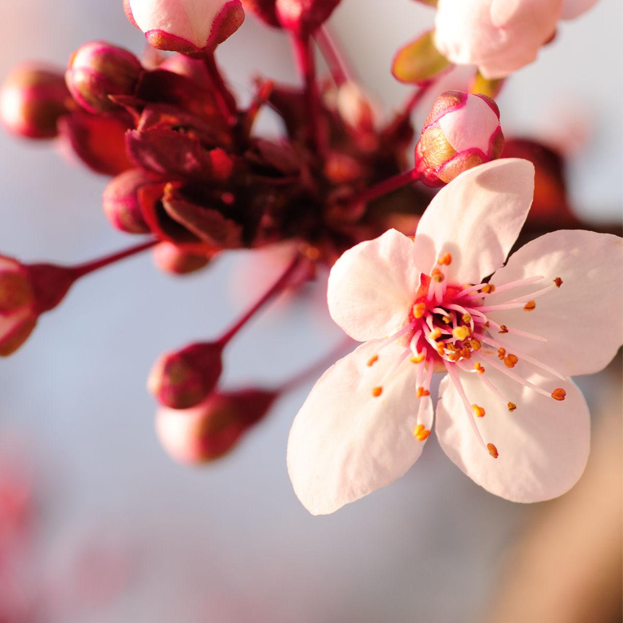 9 fotograf as gratis de flores color rosa fucsia y lila - Fotos de rosas de colores ...