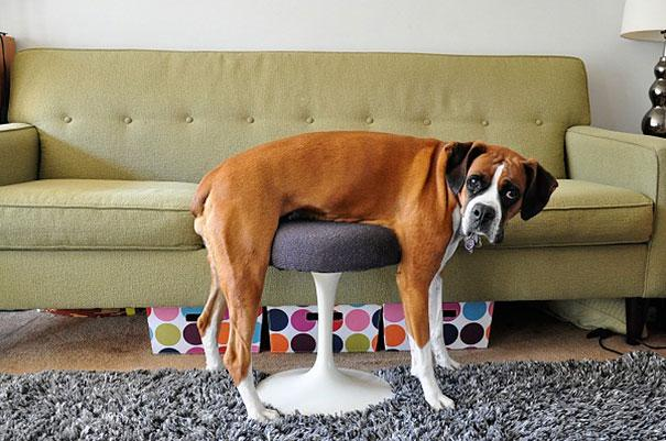 Foto divertenti di animali nel mondo YouTube - Foto Di Cani E Gatti Divertenti