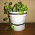 DIY: Reciclando 2 en 1: Cubo de pintura + calendario