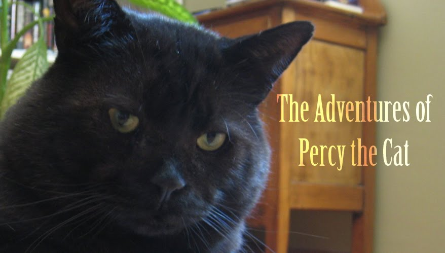 The Adventures of Percy the Cat