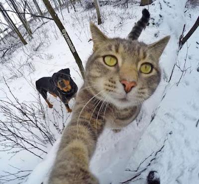 Foto Kucing Yang Gemar Selfie 02