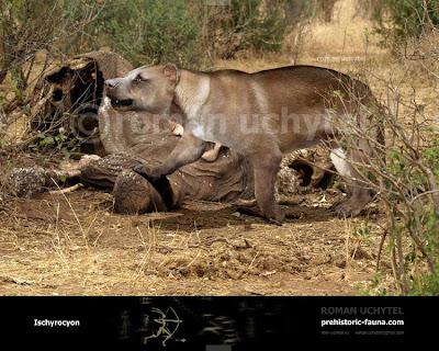 carnivora extinta Ischyrocyon